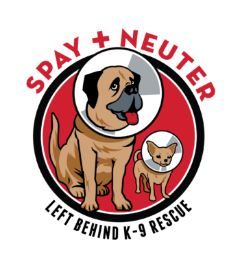 World Spay Day 3